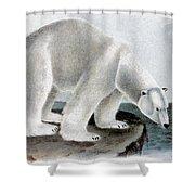 Polar Bear (ursus Maritimus) Shower Curtain