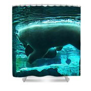 Polar Play Shower Curtain