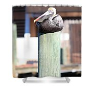 Pole Top Pelican Shower Curtain