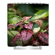 Polka Dot Plant Shower Curtain