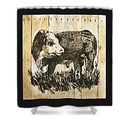 Polled Hereford Bull 11 Shower Curtain