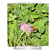 Pollen Collection Shower Curtain