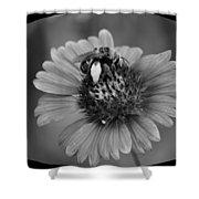 Pollen Collector Bw Shower Curtain