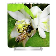 Pollen - Covered - Bee Shower Curtain