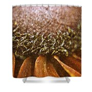 Pollenated Painted Daisy Shower Curtain