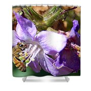 Pollinating 1 Shower Curtain