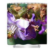 Pollinating 3 Shower Curtain