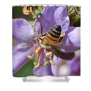 Pollinating 4 Shower Curtain