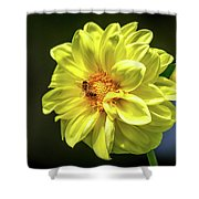 Pollinating Shower Curtain