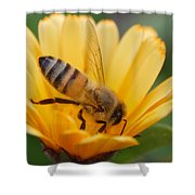 Pollination 2 Shower Curtain