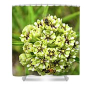 Pollination Happening Shower Curtain