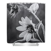 Pollinator Shower Curtain