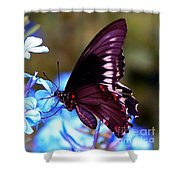 Polydamas Swallowtail Butterfly Shower Curtain