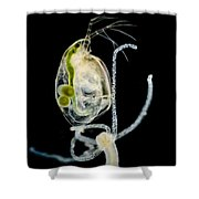Polyp Capturing Waterflea, Lm Shower Curtain