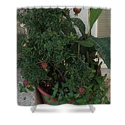 Pomegranate In The Pot Greece  Shower Curtain
