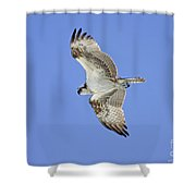 Ponce Osprey 1 Shower Curtain