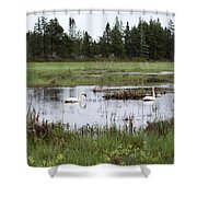 Pond And Swans Shower Curtain
