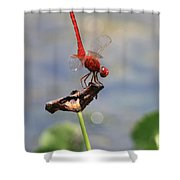 Pond Ballerina Shower Curtain
