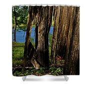 Pond Fragments Shower Curtain