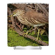 Pond Heron With Fish  Shower Curtain