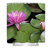 Pond Lily And Bud Shower Curtain
