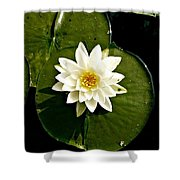 Pond Lily Shower Curtain