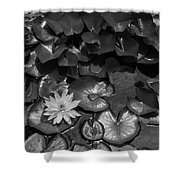 Pond Shower Curtain