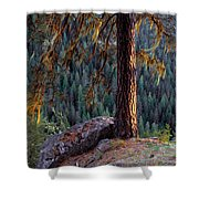 Ponderosa Pine Shower Curtain
