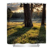 Ponderosa Pine Meadow Shower Curtain