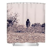 Poney Shower Curtain