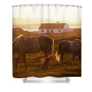 Ponies Grazing In A Field, Connemara Shower Curtain