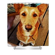 Pooch Shower Curtain