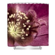 Popcorn Explosion Shower Curtain