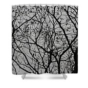Popcorn Tree Budding Shower Curtain