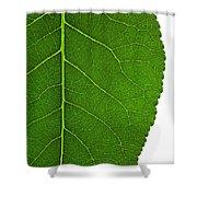 Poplar Leaf A Key To Biofuels Shower Curtain