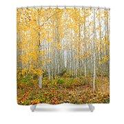 Poplar Tree Grove In Fall Shower Curtain