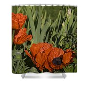 Poppies 1 Shower Curtain
