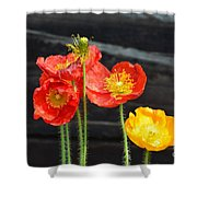 Poppies 17-01 Shower Curtain