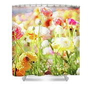 Poppies 3 Shower Curtain