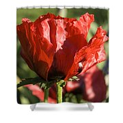 Poppies 5 Shower Curtain