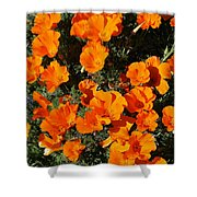 Poppies Alive Shower Curtain