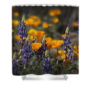 Poppies And Lupines  Shower Curtain