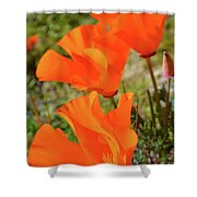 Poppies Antelope Valley Shower Curtain