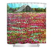 Poppies At Cedar Point Shower Curtain