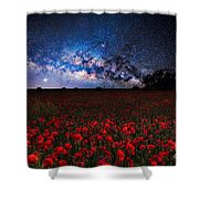 Poppies At Night Shower Curtain