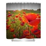 Poppies At Sunset Shower Curtain