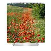 Poppies Awash Shower Curtain