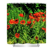 Poppies Flowerbed Shower Curtain