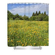 Poppies Forever Shower Curtain