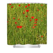 Poppies In A Wheat Field Shower Curtain